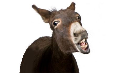 mule21