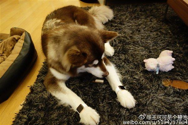 13015-7371-wang-si-cong-dog-apple-watch1-l